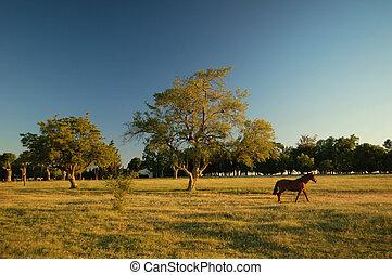 Farm field (3) - Farmland. Uruguay