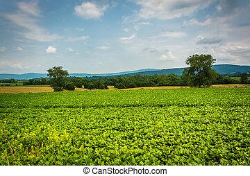 Farm field at Antietam National Battlefield, Maryland.