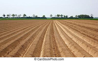 farm field in crop on a sunny day
