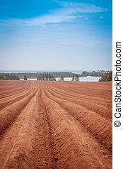 Farm field in Prince Edward Island - Farmer's field in...