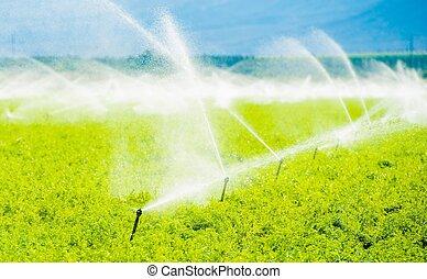 Farm Field Irrigation. Crop Irrigation in California...