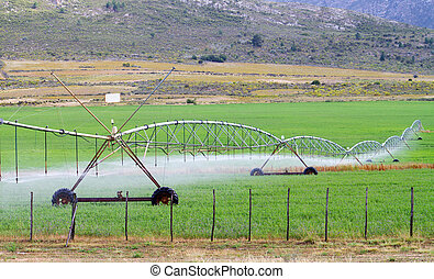 farm field irrigation system watering plants