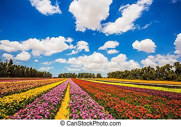 Farm field of beautiful flowers