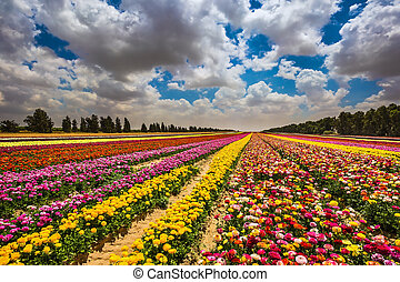 Farm field of flowers