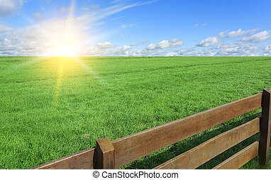 Farm. Field with grass and a fence.