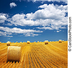 Farm field with hay bales - Agricultural landscape of hay ...