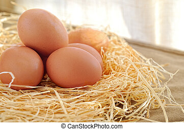 fresh eggs on straw in a table