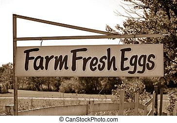 Farm Fresh Eggs - Rusty old sign advertising farm fresh eggs...