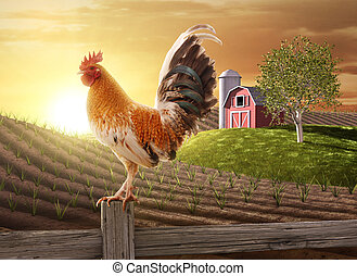 Rooster perched upon a farm fence post as the sun rises behind him