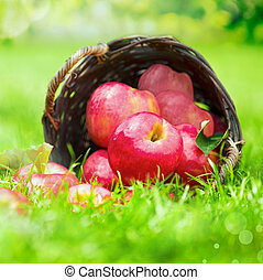 Farm fresh red apples in a wicker basket
