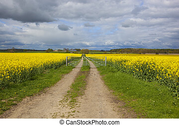 farm gate and flowering rapeseed crops