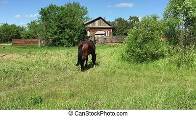 Farm horse grazing in a green field
