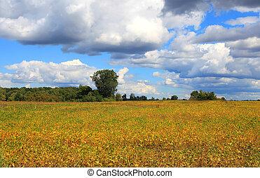 Farm in autumn time