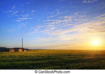 Farm in rapeseed crop field at sunrise landscape