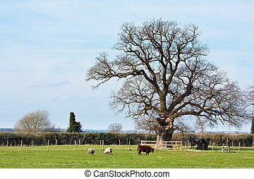Farm in Suffolk