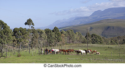 Farm in Swellendam, South Africa