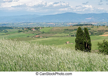 Farm in Val d'Orcia Tuscany