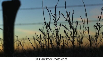 Farm Land 02 - Pan and rack focus from some grass and barbed...