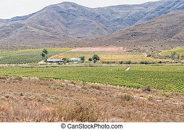 Farm landscape near Bonnievale