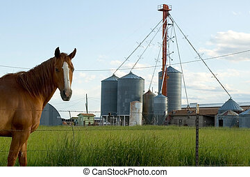 A horse on working farm