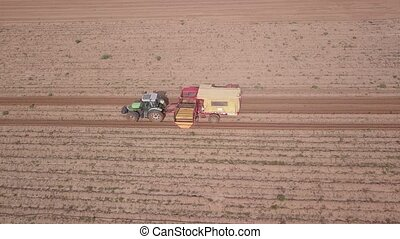 Potatoes harvesting with tractor in large field. - Farm ...