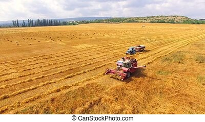Farm Machinery On Wheat Field At Harvest Time - AERIAL VIEW....