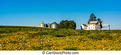 Farm near Stewartstown, Pennsylvania.