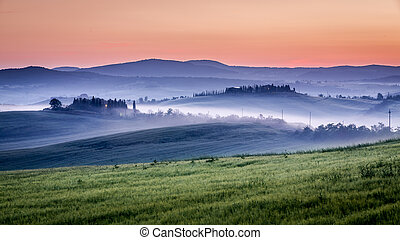 Farm of olive groves and vineyards in foggy morning