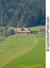 Farm on a hill
