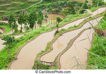 Farm on rice terraced fields in surice,