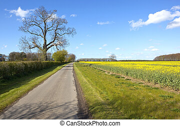farm road with flowering canola field