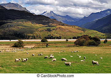 Farm with sheep landscape in south Island, New Zealand.