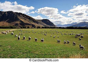 Farm South Island New Zealand