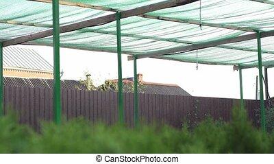 Farm spray industrial system. Irrigation of seedlings