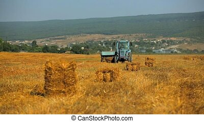 Farm Tractor Collecting Straw In Stubble Field - This is a...