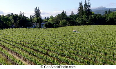 Farm tractor spraying pesticides & insecticides herbicides over green vineyard field.