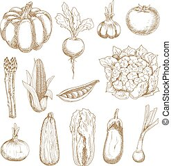 Farm vegetables sketches in vintage style