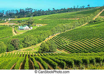 Farm winery Cape Town - Aerial view of winery farm in green ...
