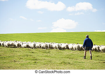 Farm Worker With Flock Of Sheep