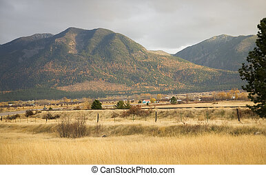 Farm Yellow Aspens in the Hills Fall Colors and Yellow Grass Mis