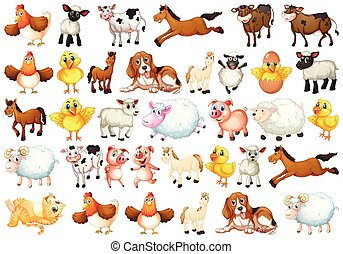 farma, dát, živočichy