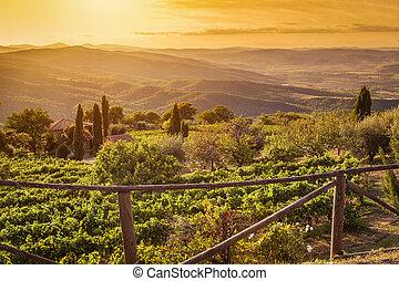 farma, italy., toskánsko, vinice, západ slunce, krajina, víno