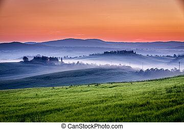 farma, lesík, ráno, vinice, oliva, mlhavý
