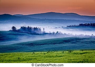 farma, lesík, vinice, oliva, mlhavý, východ slunce