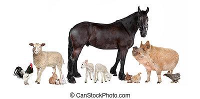 farma, skupina, živočichy