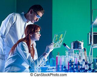 farmaceutisk, forskare, studera, a, prov