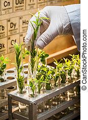 farmaceutisk, laboratorium, under, studera, växande, planterar