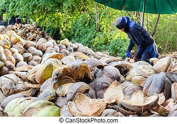 farmer, éles, kókuszdió kihámoz