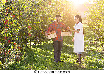 Farmer and agronomist in apple orchard
