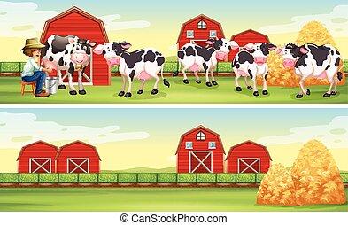 Farmer and cows in the farm